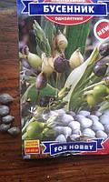 Семена бусенник однолетний 1г