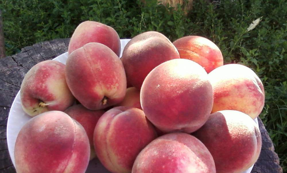 Саженцы персика Ред Хейвен
