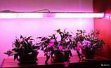 Освещение для подсветки и выращивания растений