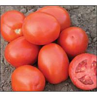 Семена томата сортового Рио Фуего ,0,5 кг , GSN (Франция)