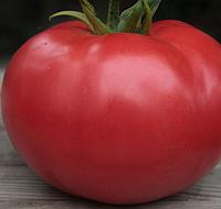 KS 222 F1 (КИБО F1)  100семян - семена томата, Kitano Seeds, фото 1