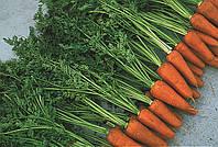 Морковь Шантане 3 Комет  Nickerson Zwaan 500 г