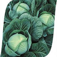 Капуста Галакси F1 Seminis 2500 семян, фото 1