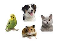 Торговые марки/бренды зоотоваров
