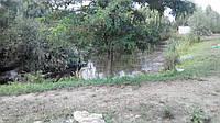 Очистка озер рыбоводческих хозяйств, фото 1