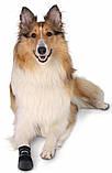 Ботинки Trixie Walker Care для собак, M 2 шт (Бордер-колли) , фото 5