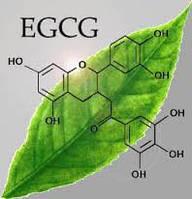 Зеленого чая экстракт 90% порошок, капсулы  ин-балк