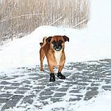 Ботинки Trixie Walker Active для собак, L 2 шт (Лабрадор) , фото 3