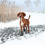 Ботинки Trixie Walker Active для собак, L 2 шт (Лабрадор) , фото 4