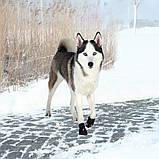 Ботинки Trixie Walker Active для собак, L 2 шт (Лабрадор) , фото 5