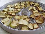Электросушилка для овощей и фруктов Беломо, фото 4