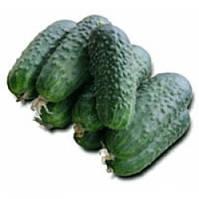 ЦИРКОН F1 - семена огурца партенокарпического, 1 000 семян, Bayer