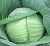 АНКОМА F1 - семена капусты калиброванные, 1 000 семян, Rijk Zwaan
