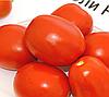 ЧИБЛИ F1 - семена томата детерминантного, 2 500 семян, Syngenta
