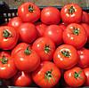АКСАЙ F1 - семена томата полудетерминантного, 500 семян, Bayer