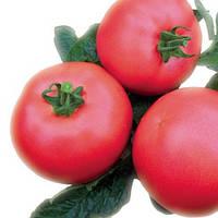 ГРИФОН F1 - семена томата индетерминантного розового, 500 семян, Bayer, фото 1