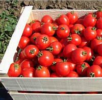 ДОНАЛЬД F1 - семена томата детерминантного, 1 000 семян, Bayer, фото 1