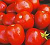 ЛАМПО F1 - семена томата детерминантного, 5 000 семян, Bayer