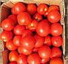ОРКО F1 - семена томата детерминантного, 1 000 семян, Bayer
