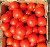 ОРКО F1 - семена томата детерминантного, 1 000 семян, Bayer, фото 1