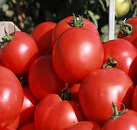 СКИФ F1 - семена томата детерминантного, 1 000 семян, Bayer, фото 1