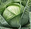 КАУНТ F1  - семена капусты белокочанной, 2 500 семян, CLAUSE