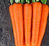 ЛАГУНА F1 - семена моркови Нантес (1,6-1,8), 25 000 семян, Bayer