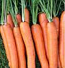 ЛАГУНА F1 - семена моркови Нантес (1,8-2,0), 25 000 семян, Bayer