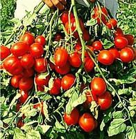 РАПІТ F1 - насіння томату детермінантного, 1 000 насінин, Semenis, фото 1