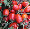 KS 720 F1 - семена томата детерминантного, 5 грамм, Kitano Seeds
