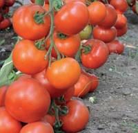 ДОФУ F1 - насіння томату індетермінантного, 1 000 насінин, Rijk Zwaan, фото 1