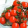 СОММА F1 - семена томата детерминантного черри, 1 000 семян, Bayer