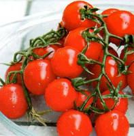 СОММА F1 - семена томата детерминантного черри, 1 000 семян, Bayer, фото 1
