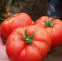 ЛЕЗАФОРТА F1 - семена томата индетерминантного, 250 семян,Enza Zaden, фото 1