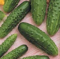 ПАСАМОНТЕ F1 - партенокарпічний огірок, Syngenta 500 насінин
