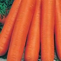 Навал F1 насіння моркви Нантес (2,2-2,4 мм)