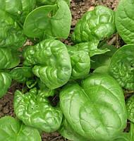 МАТАДОР - семена шпината, Semo