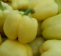 БЛОНДИ F1 - семена перца сладкого 500 семян, Syngenta, фото 1