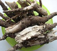 Корни подсолнечника, корень подсолнуха (от камней в почках)