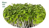 Микрозелень растущая, ГОРЧИЦА, фото 1