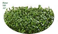 Органические ростки подсолнуха, 100 г, микрозелень