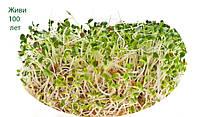 Микрозелень растущая, ЛЮЦЕРНА, бокс