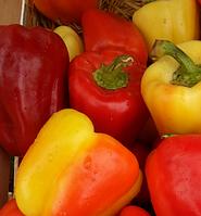 БАРБИ F1 - семена перца сладкого, 500 семян, Syngenta, фото 1