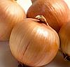 ХИЛТОН F1 - семена лука репчатого, 250 000 семян, Syngenta