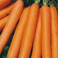 МОНАНТА - насіння моркви Нантес, 50 грам, Rijk Zwaan, фото 1