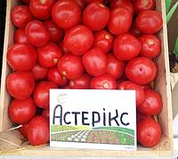 АСТЕРИКС F1 - семена томата детерминантного, 2 500 семян, Syngenta, фото 1