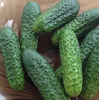 РОЯЛ F1  - семена огурца,  10 грамм, CLAUSE, фото 1