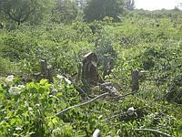 Вырубка деревьев и кустарника.