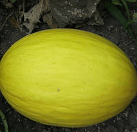 ФОРБАН F1  - семена дыни 1 000 семян, CLAUSE