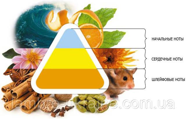 Пирамида ароматов ламбре